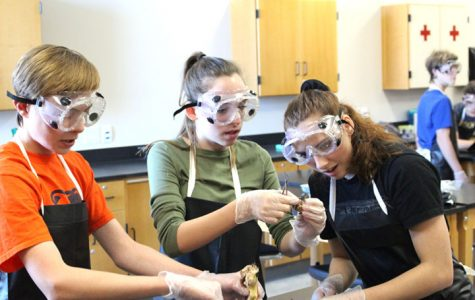 Biology students dissect rats in December